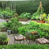 Money Saving Gardening Tips